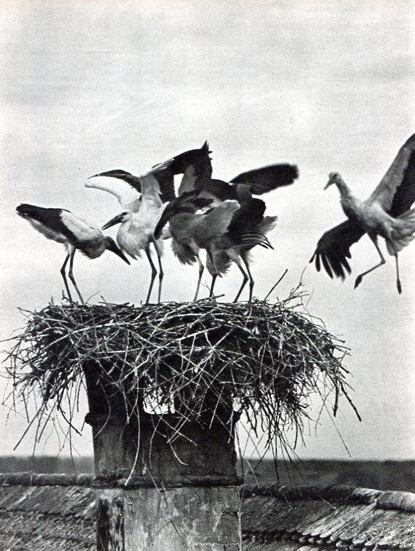 Resultado de imagen para Rudolf Balogh