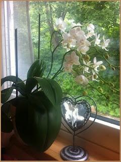 My orchid. Aqua-lady