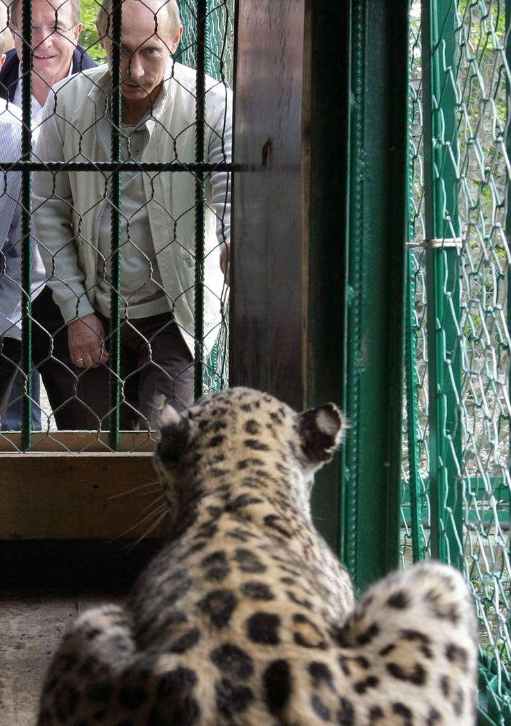 Putin looking at a leopard.