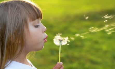 """I decided to celebrate dandelions! You can learn how to:  Pick the flowers for pancakes and syrup and cordial  Use the leaves for salad and steaming  Kept the roots for dandelion coffee.  """"What is a weed? A plant whose virtues have not yet been discovered."""" — Ralph Waldo Emerson"""