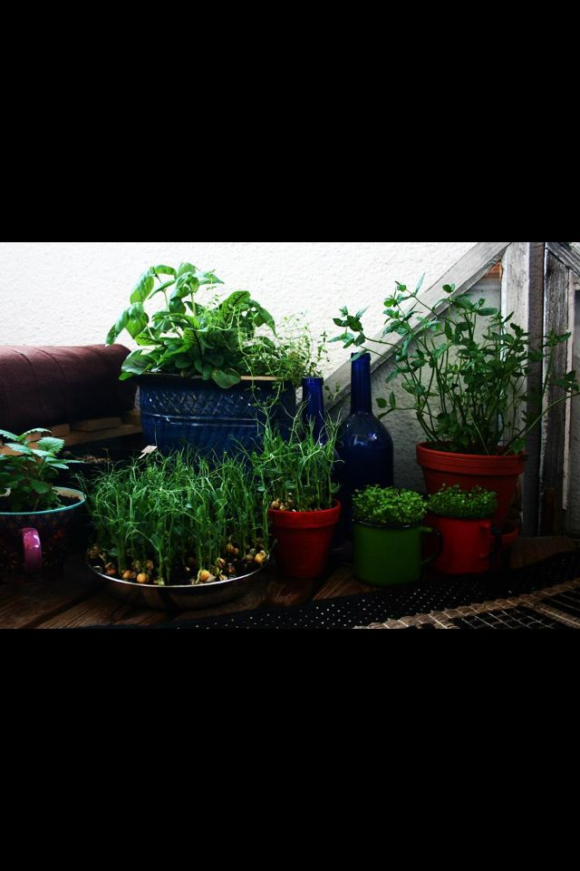 Urban garden in balcony with a collection of pots and cups