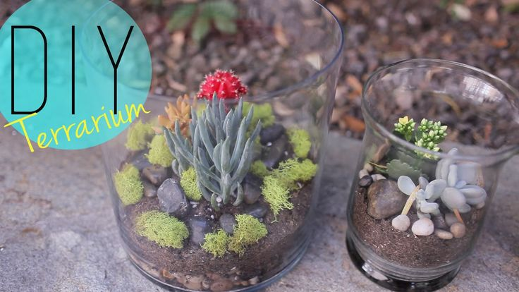 DIY Indoor Garden - Cactus Terrarium {How to} by ANNEORSHINE (+playlist) terrarium de cactus ou suculentas