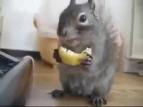 блог приколы смешное видео видеопоздравления funny videos Любые НОВОСТИ: Смешные моменты с животными ч.5