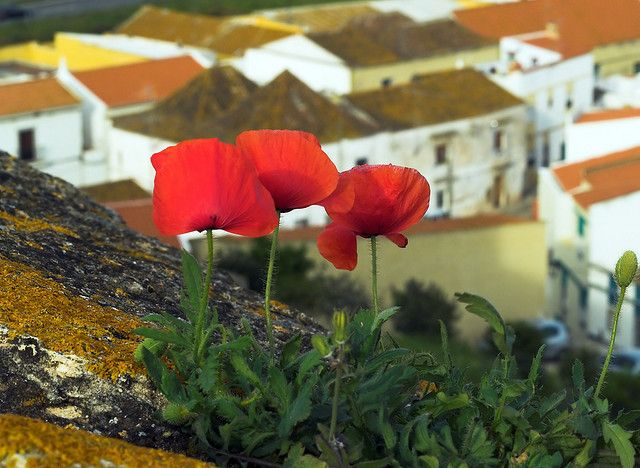 The Wild Flowers On The Castle Wall by Louis Dobson (formerly acampm1), via Flickr Castro Marim Castle, Algarve, Portugal.