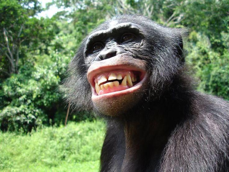Bonobo @ Foorum Karlín