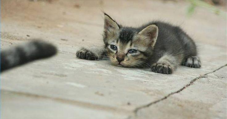 Faça seu próprio gatil. A maioria dos donos de animais de estimação sabem dos perigos que um gato enfrenta ao ir para fora de casa. Cães, carros e veneno, há um mundo de ameaças quando os felinos saem dos confins de seu lar. A maioria dos donos também sabem que os gatos anseiam por sentir o sol no rosto, a grama sob as patas e a emoção de pular em cima de um gafanhoto ...