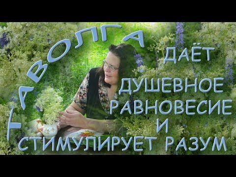 (5) ТАВОЛГА дает душевное равновесие и стимулирует разум - YouTube