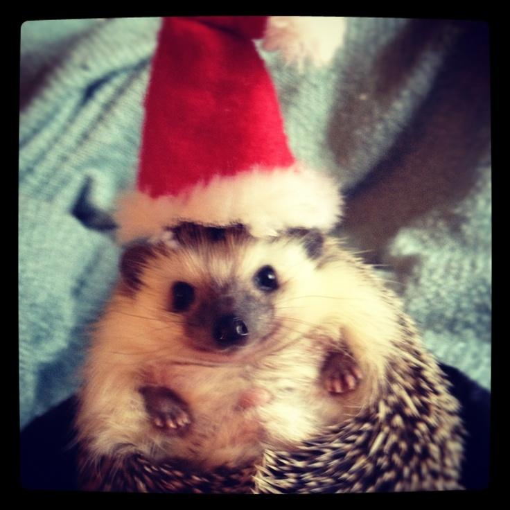Holiday hedgehog Jolly holiday, Holly jolly, Jolly