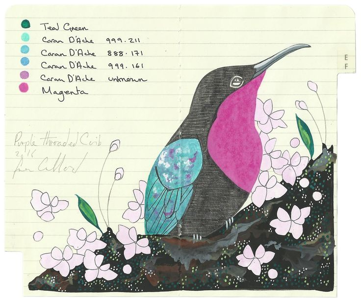 An original drawing of a Purple Throated Carib using watercolour, ink, gouache and pencil over my personal small Moleskine diary.14 x 18cm2016