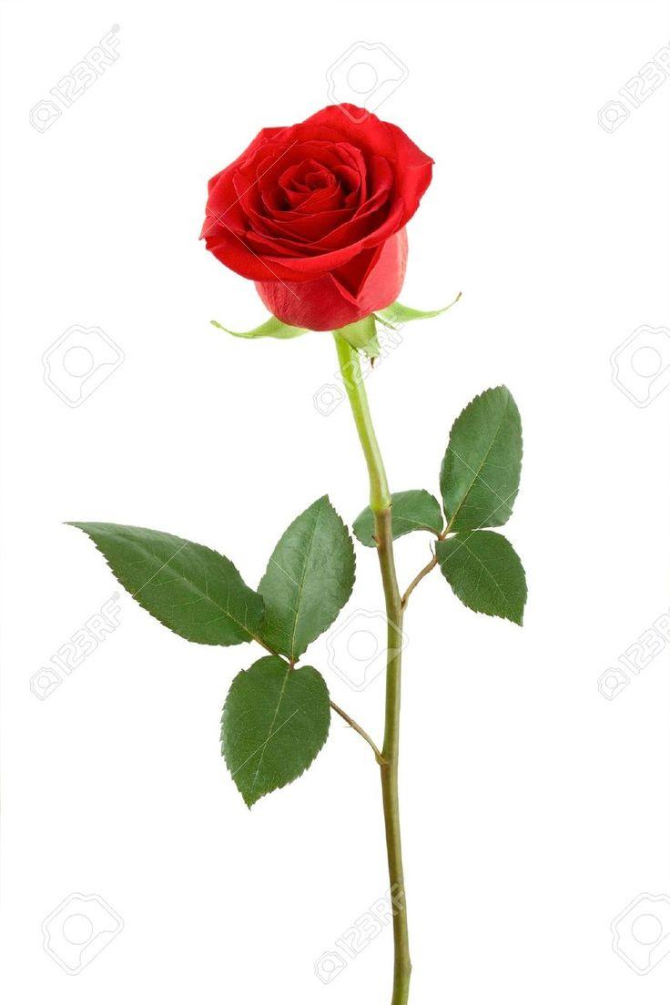 belle rose muslim singles Belle rose muslim benevolent association: 09/05/02: bel ombre foundation for empowerment: 17/06/08: bhakt, bhakti aur bhagawan: 16/08/01: bhaktivedanta college of .