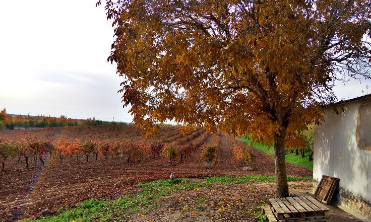 la vid en otoño
