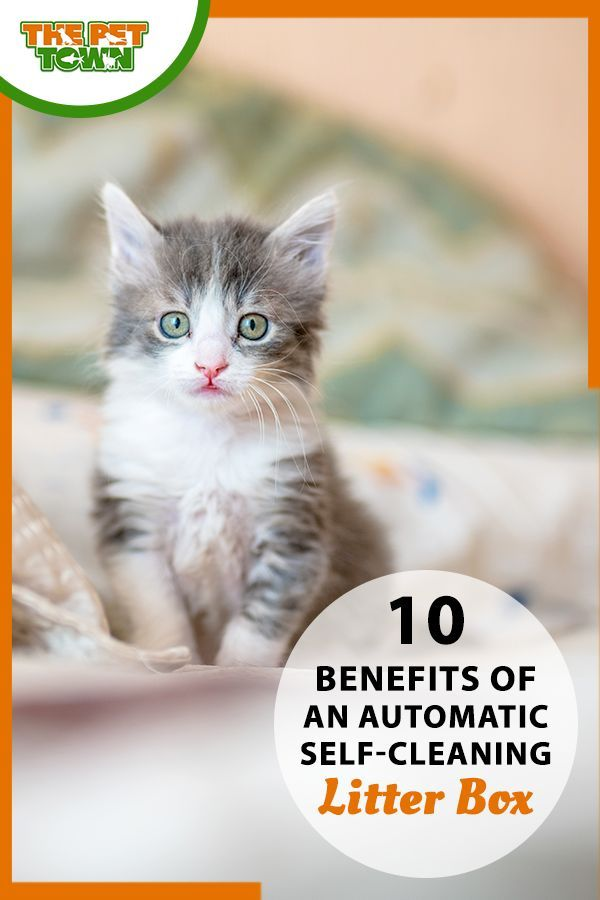 10 Benefits Of An Automatic Self Cleaning Litter Box In 2020 Cleaning Litter Box Self Cleaning Litter Box Litter Box