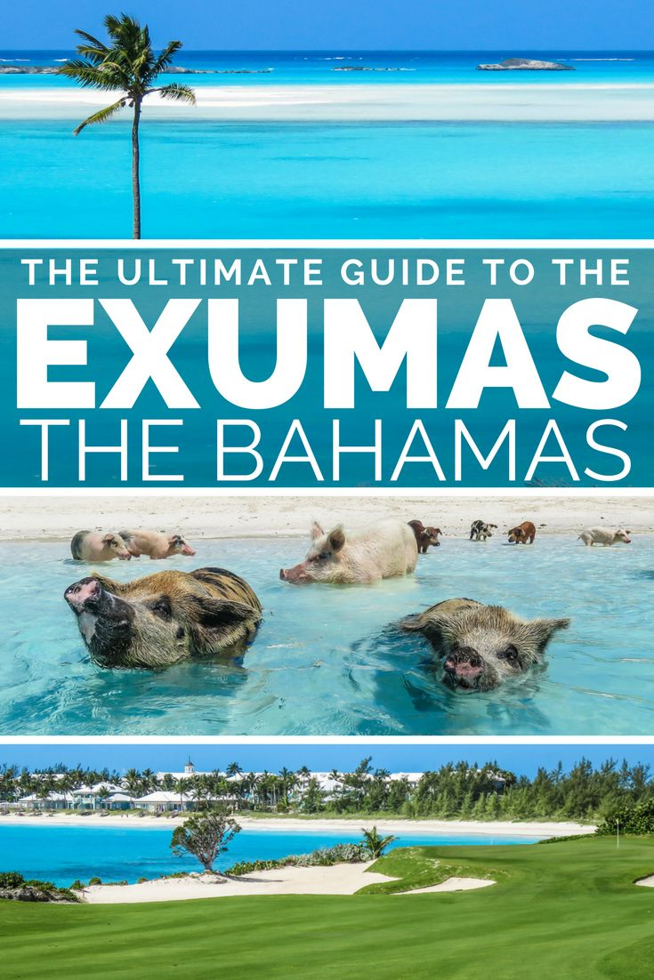 Exumas Cays: Guide to the Exumas Bahamas islands. A golfers paradise at Emerald Bay Bahamas where the Sandals Bahamas is located and the Grand Isle Resort & Spa.  On Exuma Bahamas you can go swimming with the Exumas Pigs at Staniel Cay bahamas.  Visit Geoergetown Exumas, the largest town and international airport serving it.  The Exuma Islands consit of Great Exuma bahamas and Little Exuma Bahamas aswell as the Exuma Cays, including the beautiful Staniel Cay Exuma.