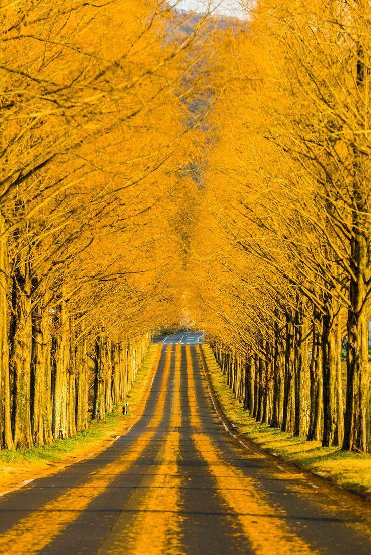 Through the golden road by Takahiro Bessho