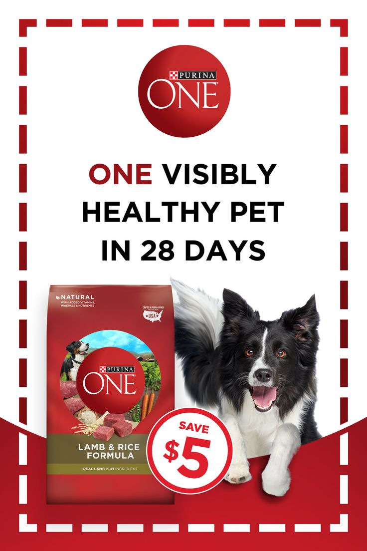 Wellness Complete Health Puppy Food Price References