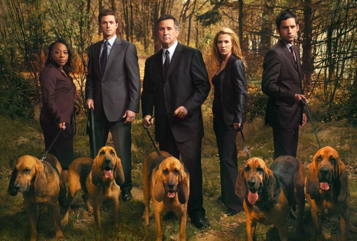 Without a Trace (2002–2009) -  Stars: Anthony LaPaglia, Poppy Montgomery, Marianne Jean-Baptiste.  -  The cases of an FBI unit specializing in missing persons investigations.  -  CRIME / DRAMA / MYSTERY
