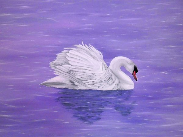 Poster,  swan,lake,scene,nature,water,life,dreamlike,fantasylike,big,birds,white,purple,lavender,image,beautiful,fine,oil,painting,contemporary,scenic,modern,virtual,wall,art,beautiful,awesome,cool,artistic,artwork,for,sale,home,office,decor,decoration,decorative,items,ideas