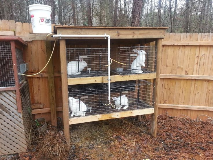 17 best images about rabbit stuff on pinterest silver for Simple rabbit hutch