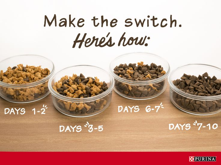As dog's grow, their nutritional needs change, and so should their dog food. Here's a simple guide for switching dogs foods in a way that is easy on your dogs stomach.