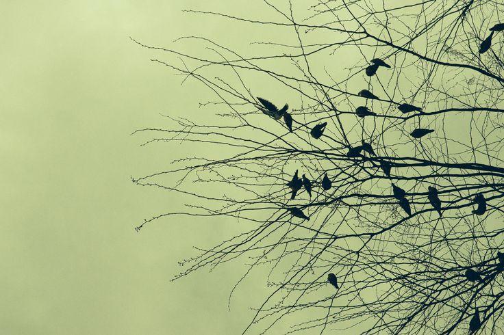 Os pombos que cagam sobre nossas cabeças.