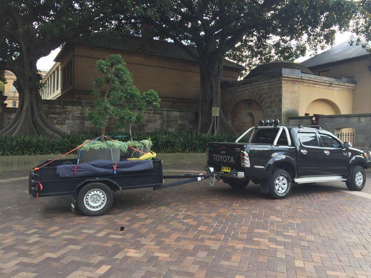 Moving Big Pot Plants In Sydney CBD- Sydney City Removalists