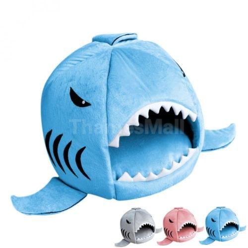 Dog Cave Shark