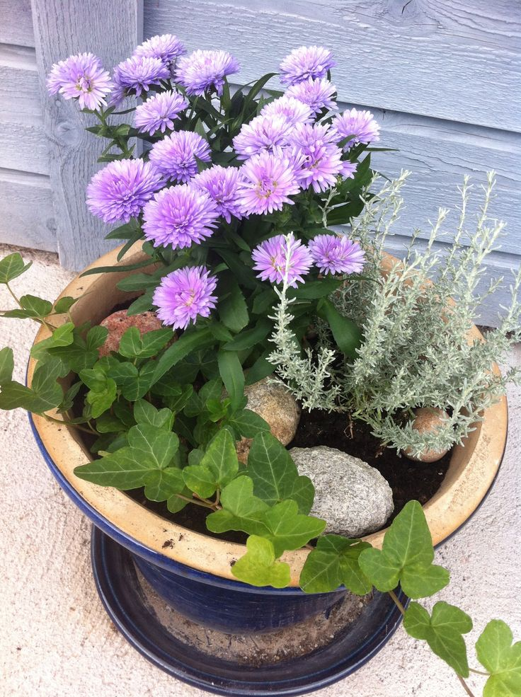 Flowers in a pot outside