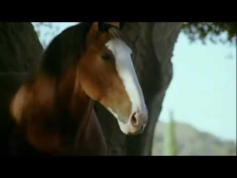 Budweiser Clydesdale Fetching A Stick Super Bowl 43 Commercial ... 'Show-off'  lol lol