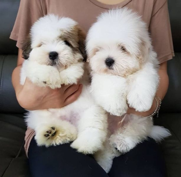 ˏˋ Theartofblushing ˎˊ Cute Puppies Cute Dogs Cute Baby Animals