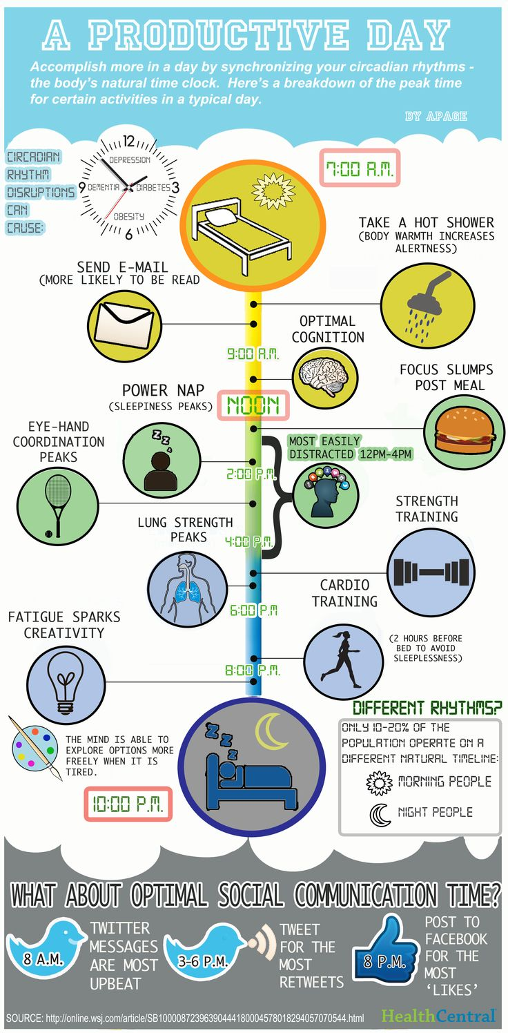 This infographic illustrates the ideal times in a day to accomplish certain tasks based on your circadian rhythms.