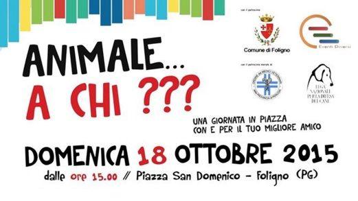 Animale... a Chi??? http://www.vivifoligno.it/evento/animale-a-chi/ #Foligno