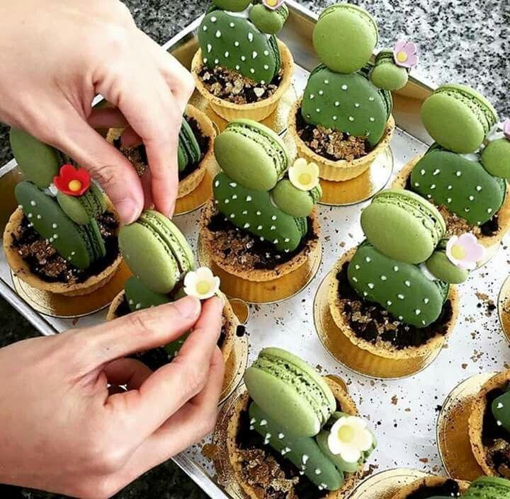 Cactus galletitas