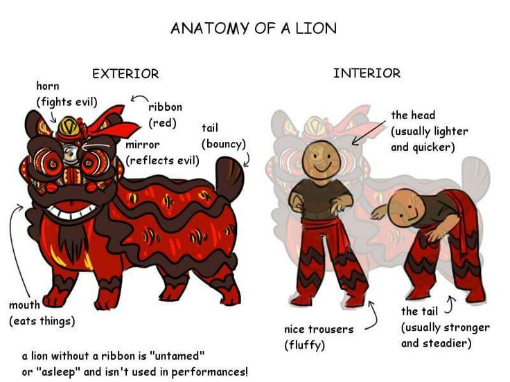 Image result for lion dance top view