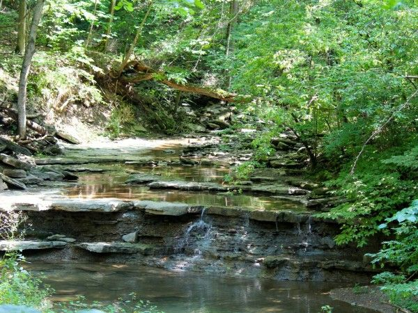 You could spend an entire day at the Cincinnati Nature Center (aka Rowe Woods) and not cover everything there is to see.