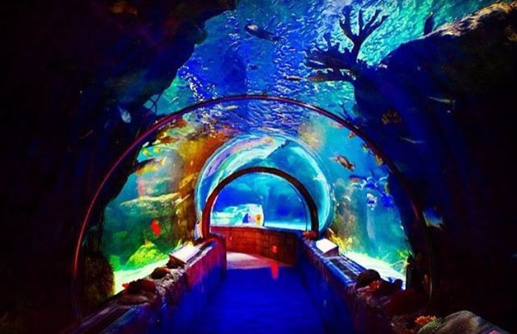Sea Life aquarium Mall of America Bloomington, MN ...