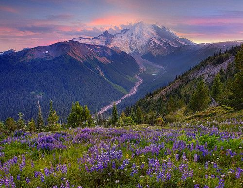 Mount Rainier Sunset  by kevin mcneal on Flickr.Long Roads, Wild Flower, Favorite Places, Kevin Mcneal, Mount Rainier, Beautiful, Rainier Sunsets, Washington States, Planets Earth