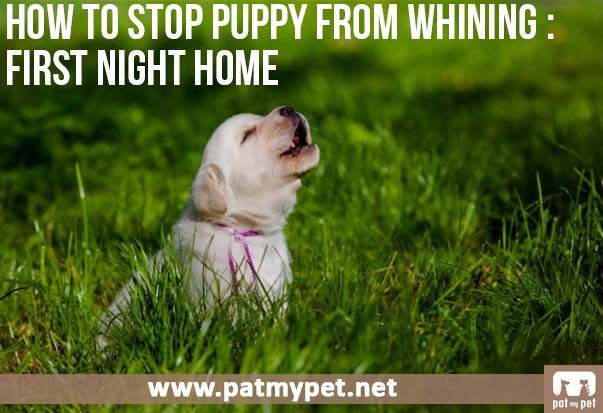 how to teach a puppy to stop whining