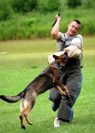 Man Pets Dog It Bites Him