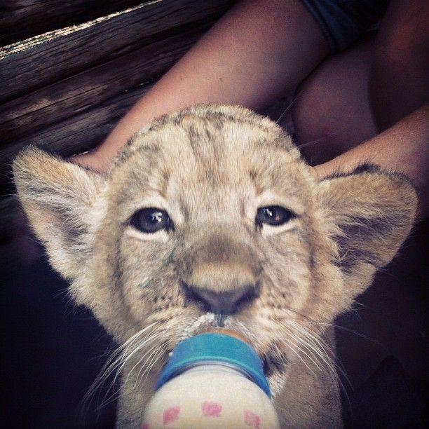 animal, lindo, Instagram, jubscvl, foto