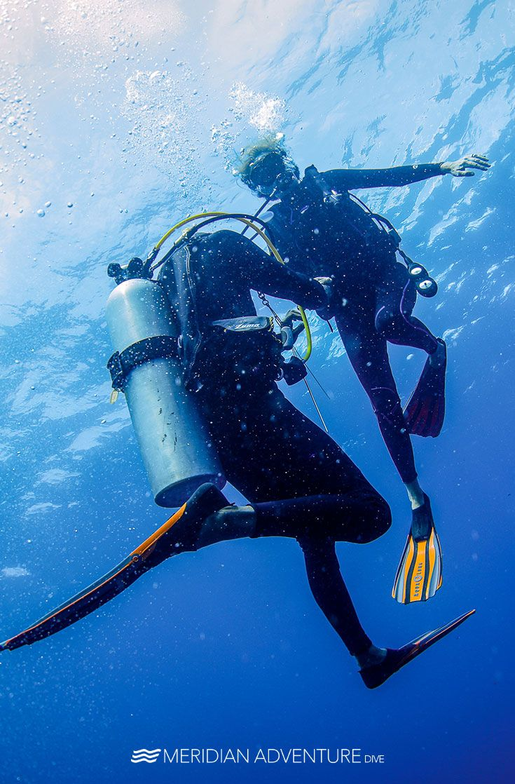 It Takes Two To Tango Meridianadventuresdive Indonesia Rajaampat Ocean Photooftheday Scubadiving Wanderlu Diving Scuba Diving Pictures Scuba Diving