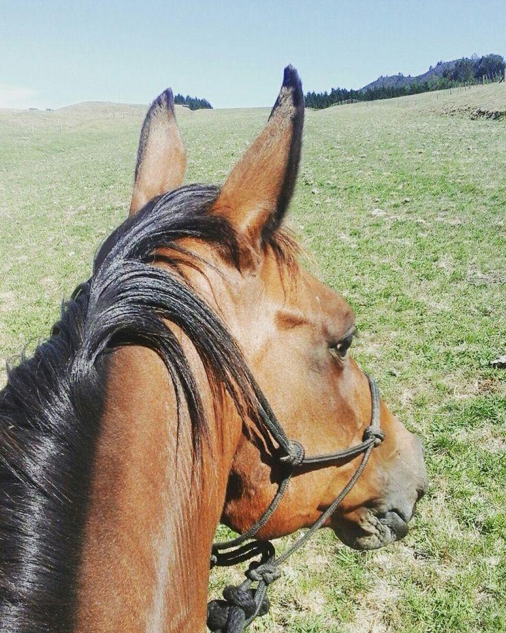 Fun galloping Ruby up the airstrip