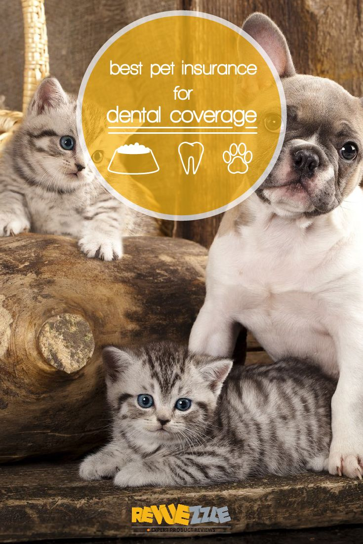 Best pet insurance for dental coverage