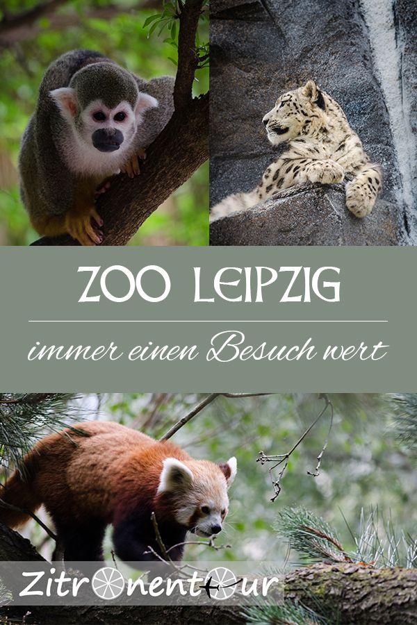 Der Zoologische Garten Leipzig Wurde Vielfach Als Einer Der Besten Zoos In Europa Ausgezeichnet Entsprechend Hoch Sind Naturlich Auc Leipziger Zoo Leipzig Zoo