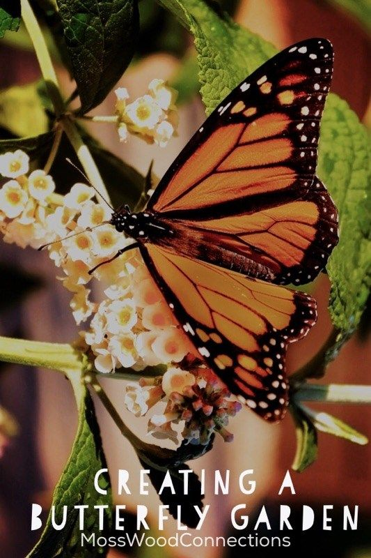Creating a Butterfly Garden with kids. #gardeningwithkids #spring #naturescience #butterflies #mosswoodconnections