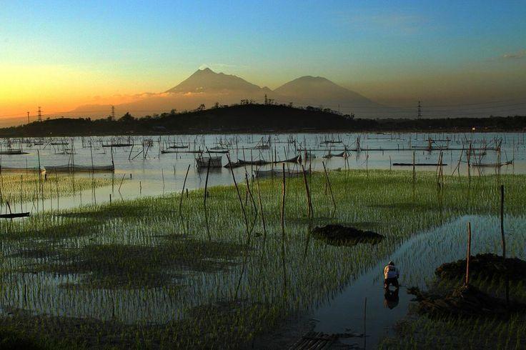 Rawa Jombor. Rawa jombor located near klaten (central java) indonesia.-- Your Shot.  NATIONAL GEOGRAPHIC.