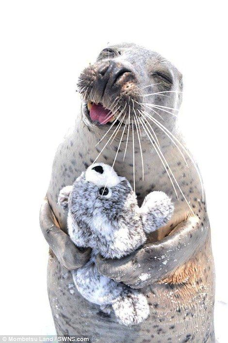 An infatuated seal has been snapped hugging a toy version of itself in an adorable selection of photos after zoo staff gifted him the fluffy animal