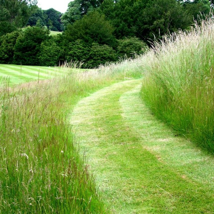 unmowed turf lawn path
