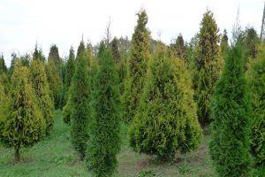 Gartex – Rośliny Ozdobne i Owocowe