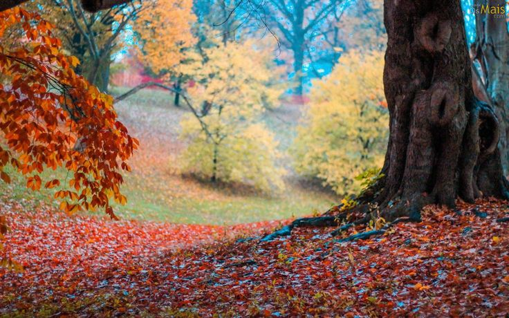 cores do outono 5
