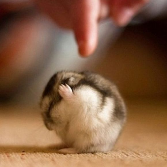 Oh No! Please Don't Hurt Me! | Cutest Paw